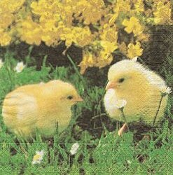ANI181 CHICKS IN THE GRASS