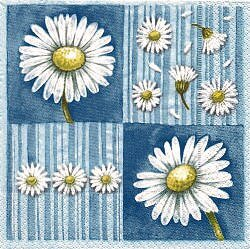 NAT065 DAISIES ON LIGHT BLUE BACKGROUND
