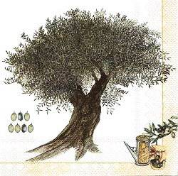 PRV025 OLIVE TREE ON CREAM BACKGROUND